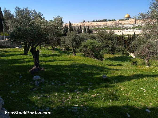 В этом году в Израиле будет посажено полмиллиона деревьев